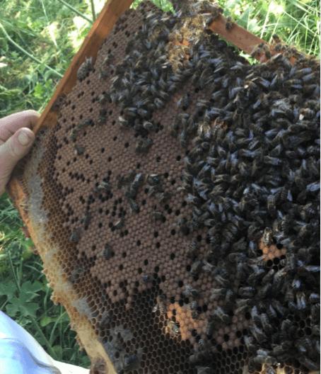 Ruche et abeilles